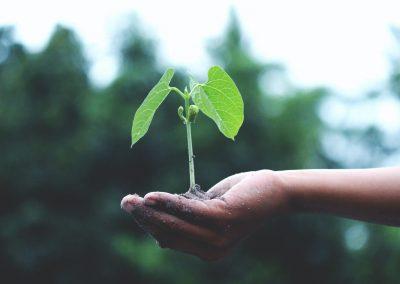 Sustainability Monitor Report, i dati sulla sostenibilità delle grandi imprese italiane